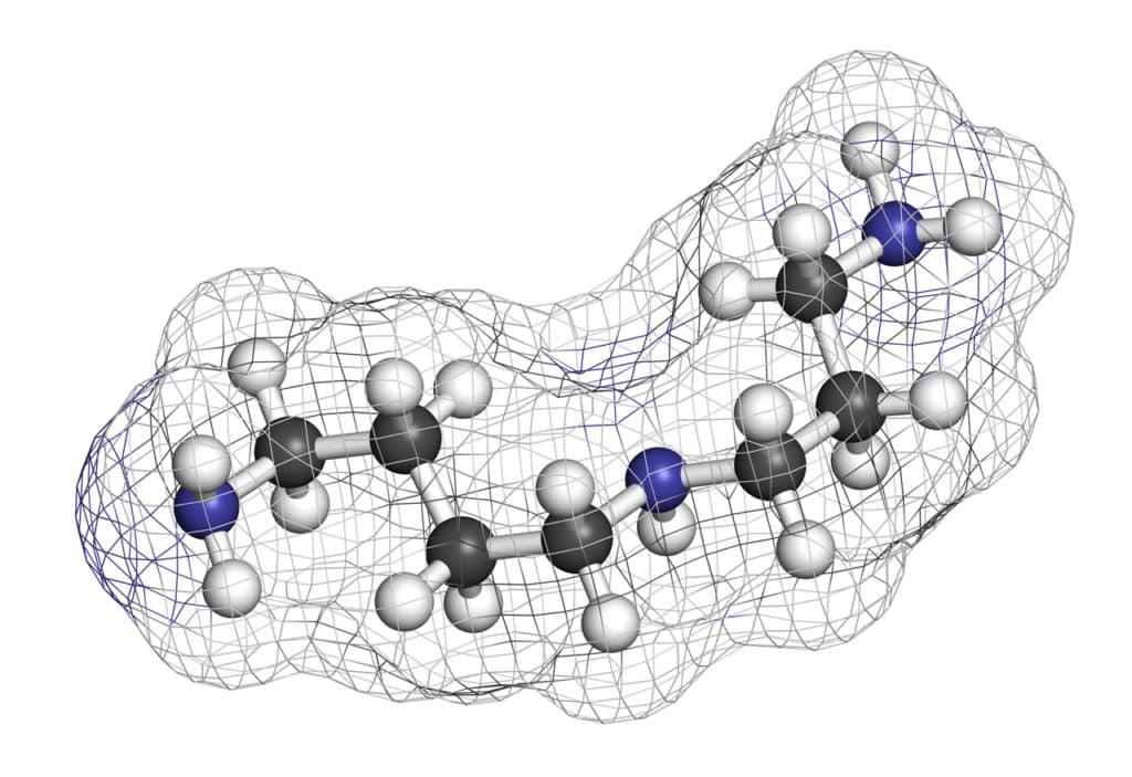 Grafische Darstellung eines Spermidin Moleküls